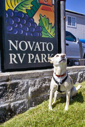 Dogs love Novato RV Park!